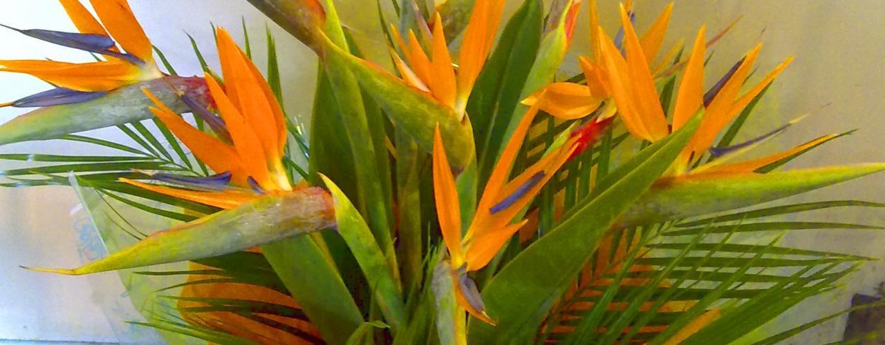 Flores Correa - Floristeria, Exornos florales, flores tropicales, Perfect Petzzz, Imagineria Motril